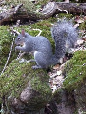 Squirrels are prevalent along the trails.